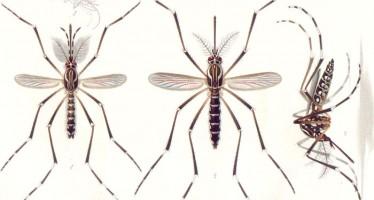 Detectado el primer caso de Zika de Andalucía
