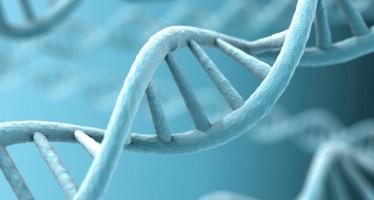 Mapa genético del cáncer de vejiga