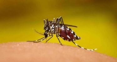 Se eleva a 32 el número de afectados por el Zika