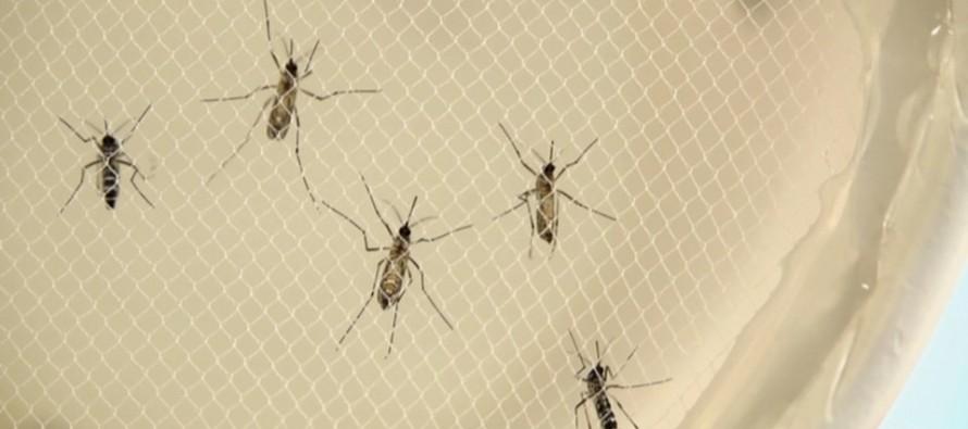 Un fármaco en desuso sería eficaz contra el zika