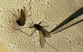 La OMS declara Europa territorio libre de malaria