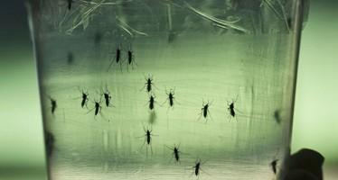 """EE UU alerta de que el impacto del Zika es """"más alarmante"""" de lo esperado"""