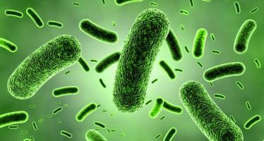 Nueva estrategia frente a las resistencias antimicrobianas