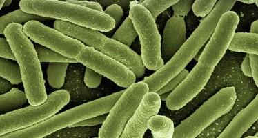 La sensibilidad colateral a antibióticos, nueva estrategia frente a resistencias