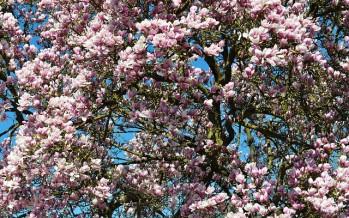 Consejos para afrontar la llegada de la primavera
