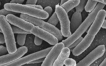Destacan el papel de los probióticos en el tratamiento en Crohn