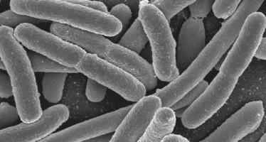 Las bacterias de la flora intestinal podrían ayudar a prevenir la diabetes tipo 2