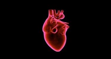 Relacionan la grasa alrededor del corazón con el riesgo de enfermedad cardiovascular