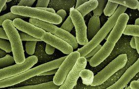 Abordaje de las resistencia antimicrobiana