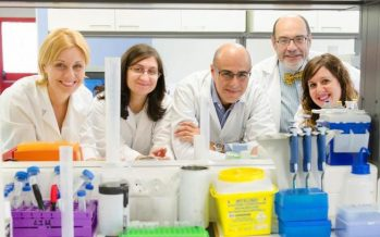 Científicos españoles desarrollan un protector renal