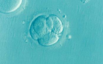 Científicos corrigen una enfermedad hereditaria en embriones humanos