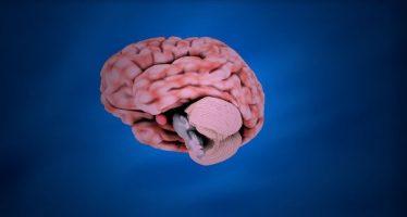 La parte del cerebro que detecta los olores también almacena recuerdos