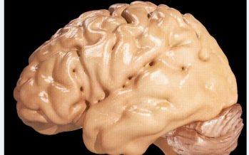 Descubren una proteína clave en el alzheimer