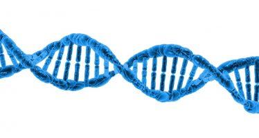 Una molécula frena el cáncer de mama