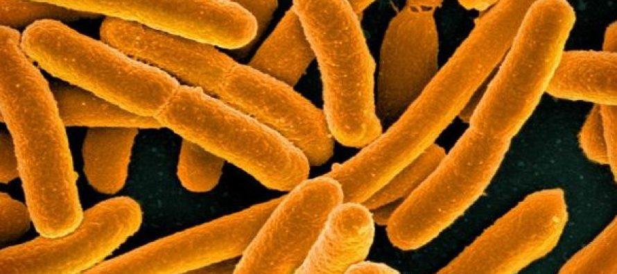 El intestino humano cuenta con más de 140.000 especies de virus