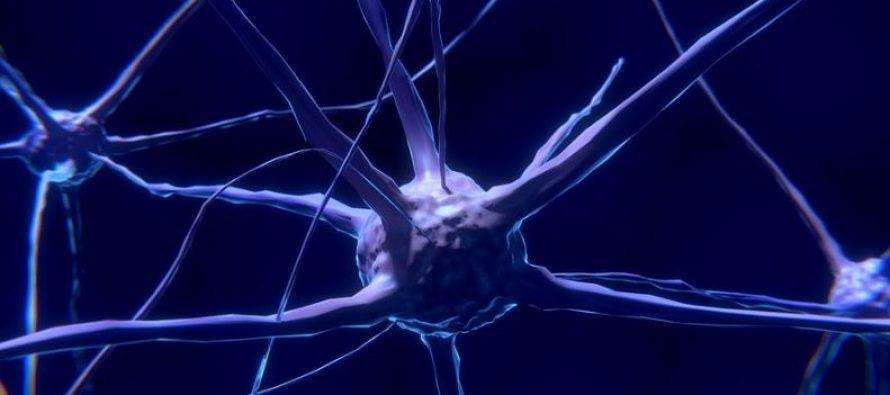 Investigadores descubren cómo atacar células tumorales durmientes