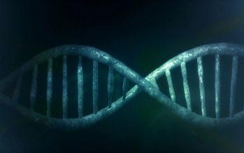 Descubren dos genes implicados en el síndrome de Bloom