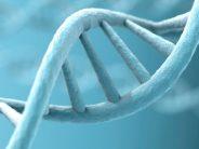 Hallan una forma genética de ELA en niños