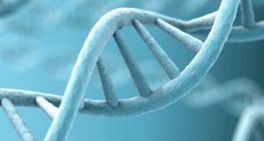 Un test genómico predice qué pacientes con cáncer responderán a la inmunoterapia