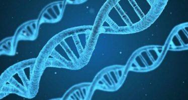 Descifran el primer nivel de plegamiento del ADN