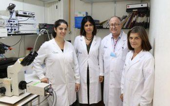 Descubren un nuevo mecanismo molecular responsable del envejecimiento del corazón