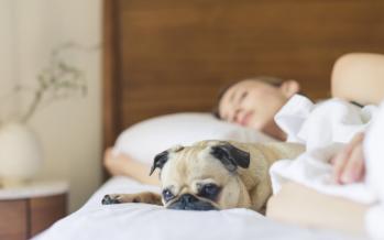 Un estudio del CNIC demuestra que dormir menos de las horas recomendadas aumenta el riesgo cardiovascular