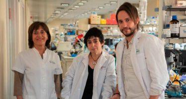 Investigadores descubren un mecanismo por el que la obesidad provoca resistencia a la insulina
