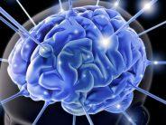 Programación de las células madre del cerebro