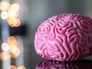 Cada año se diagnostican en España más de tres mil nuevos casos de tumores cerebrales