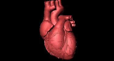 Diseñan el primer corazón completo a partir de tejidos humanos con una impresora 3D