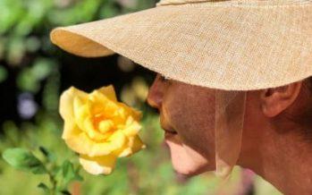 Un estudio sugiere que el deterioro del olfato, asociado con un 50% de riesgo de muerte en 10 años
