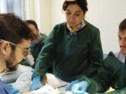 XI Edición del Curso de Cirugía reconstructiva de muñeca y mano en la FJD