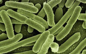 Investigadores descubren que una bacteria relacionada con la dermatitis atópica arroja luz sobre nuevos tratamientos