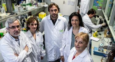 Hallan un nuevo método para diagnosticar de forma precoz la aspergilosis invasiva