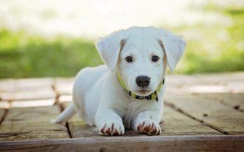 Tener un perro, bueno para el corazón según un estudio