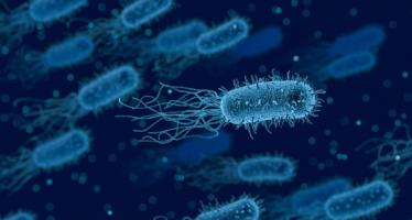 Expertos de Estados Unidos identifican en nuestro estómago hasta 8.000 bacterias