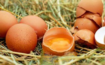 Unadieta baja en grasas y alta en claras de huevo, clave para aumentar lafertilidad masculina