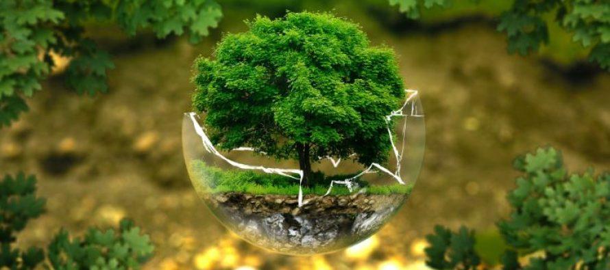 'Analiza sostenible', programa que promueve medidas para el cuidado del medio ambiente