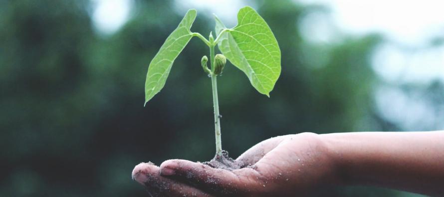 10 proyectos de DKV Impacta buscan hacer un mundo más saludable