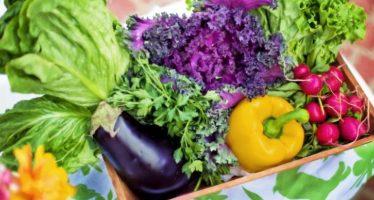 Vitamina B9: ¿Por qué es importante para el organismo?