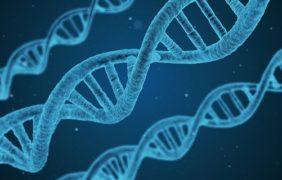Identifican un nuevo gen que puede aumentar el riesgo de padecer ELA