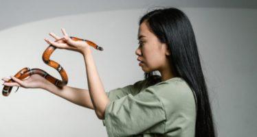 Beneficios del veneno de la serpientes para detener el sangrado de las heridas