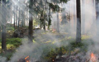 Especialistas advierten de la toxicidad del humo de incendios forestales